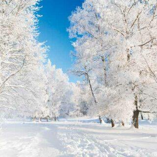 Идет волшебница-зима. Стихи Пушкина про зиму для детей